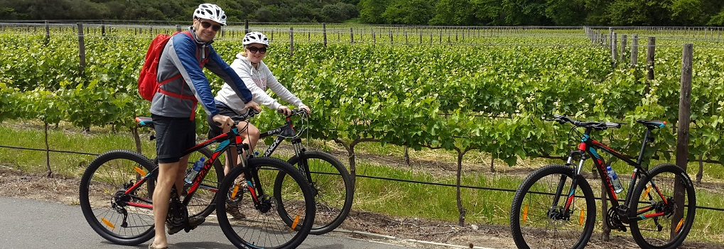 Bicycle tours in Stellenbosch - Vine Hopper